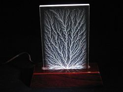 Illuminated Vertical Tree