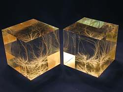 "Pair of 3"" Cubes, Natural Light"